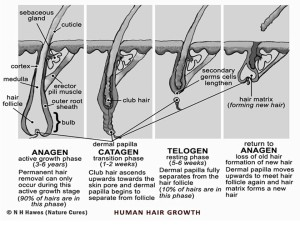 3-Stages-BETTER-of-Hair-Growth1