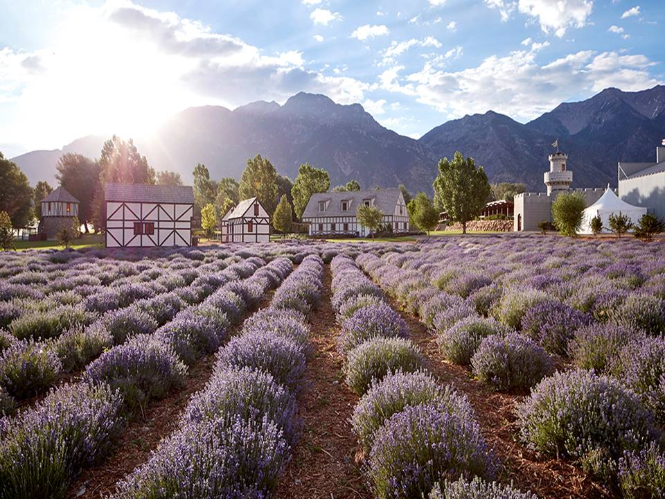 Lavender Farms - Young Living