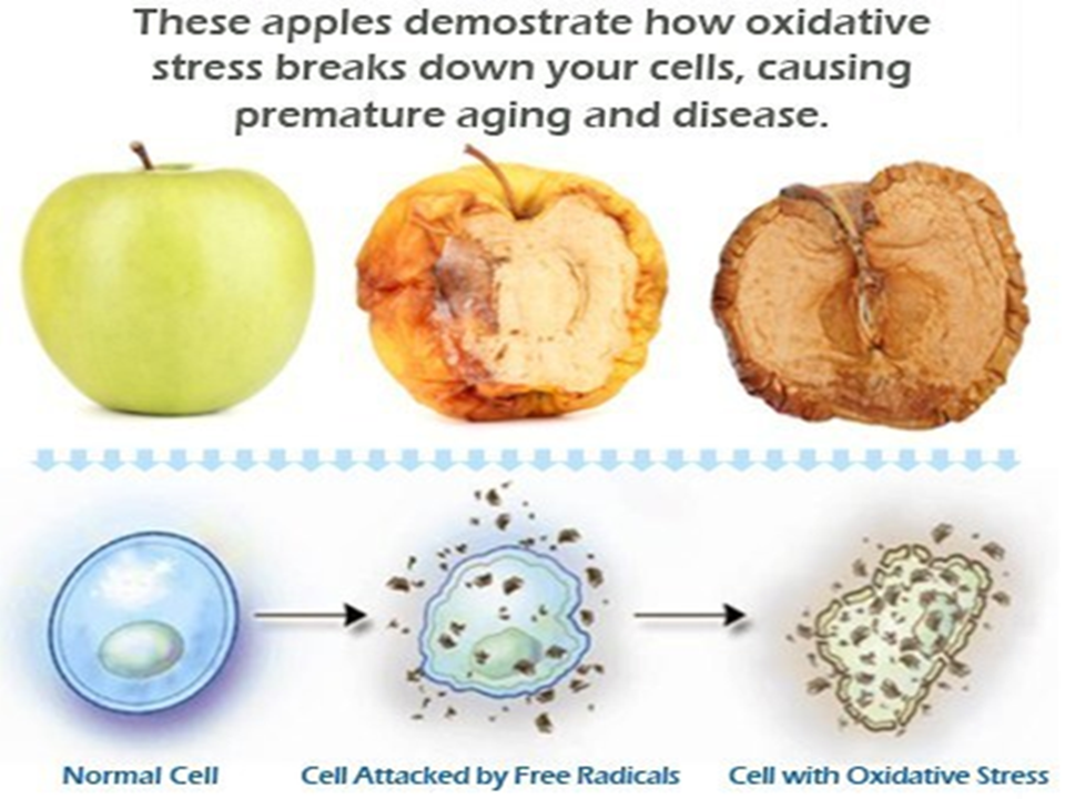 Apple Oxidative Stress